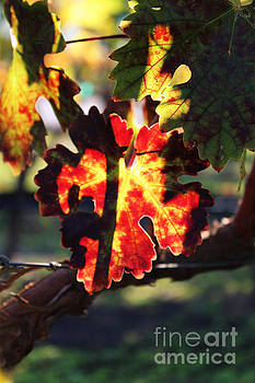 Xueling Zou - Vineyard 26