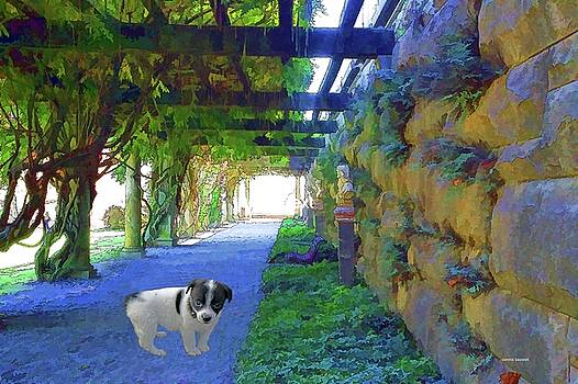 Vineyard puppy by Dennis Baswell