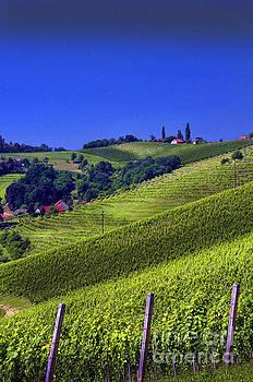 Vineyards of Jerusalem Slovenia by Graham Hawcroft pixsellpix