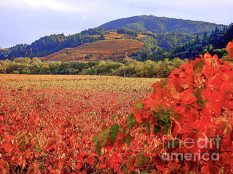 Vineyards by Terry Lynn Johnson