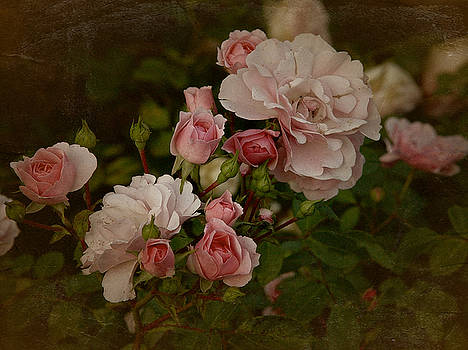 Vintage June 2016 Roses by Richard Cummings