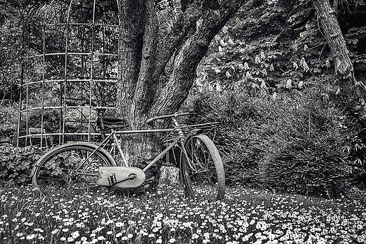 Vintage Bike In the Garden - Black and White Version by Zina Zinchik