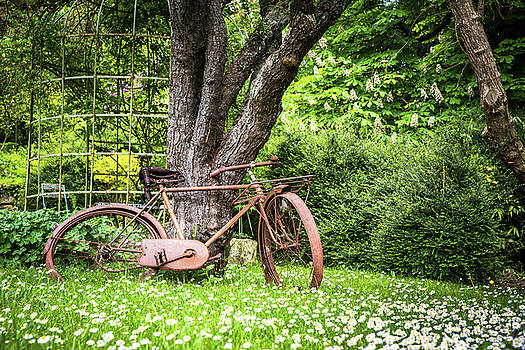 Vintage Bike In the Garden  by Zina Zinchik