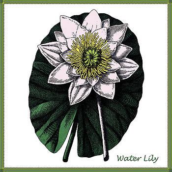 Vintage Botanical Water Lily by Joy McKenzie