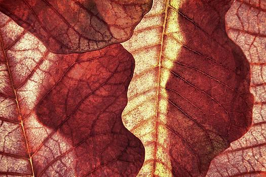 Vintage Leaf Patterns I by Leda Robertson