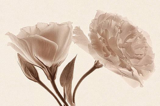 Vintage Love by Leda Robertson