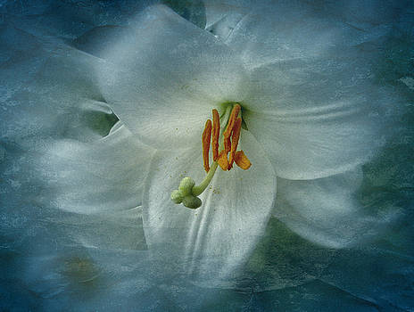 Vintage Madonna Lily by Richard Cummings