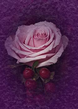 Vintage Pink Rose Feb 2017 by Richard Cummings