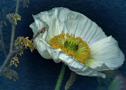 Vintage Poppy 2017 No. 2 by Richard Cummings