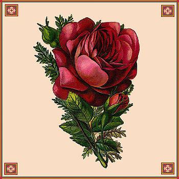 Vintage Red Rose Botanical by Joy McKenzie
