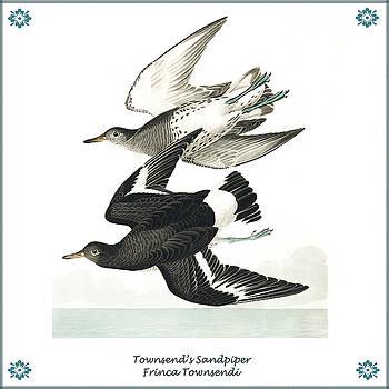 Vintage Townsends Sandpiper Audubon by Joy McKenzie