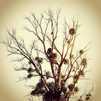 BERNARD JAUBERT - Vintage tree