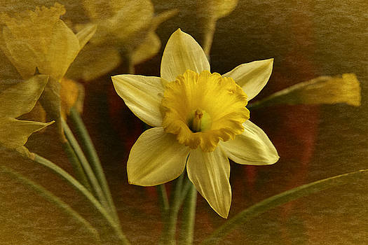 Vintage Yellow Narcissus by Richard Cummings