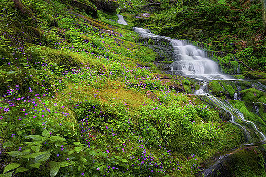Violet Falls by Bill Wakeley