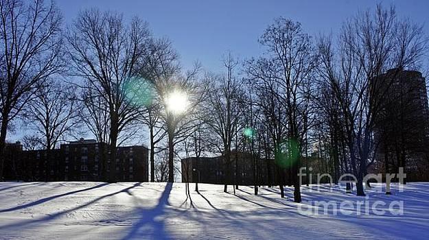 Virgin Snow in City Park at Sunrise by Lilliana Mendez