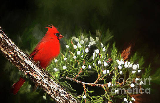 Virginia State Bird by Darren Fisher