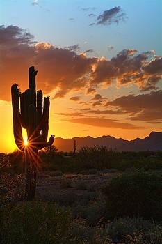 Saija  Lehtonen - Visions of a Saguaro Sunset