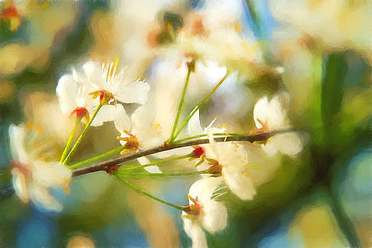 Barry Jones - Visions of Spring - Floral
