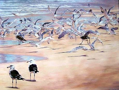 Visiting terns by Yvette Mey