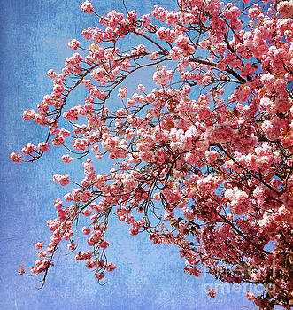 Vivid Cherry Blossoms by Maria Janicki