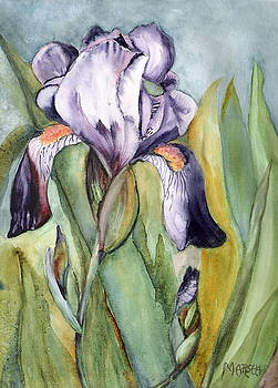 Vivid Purple Iris by Marsha Woods