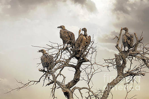Vultures in a dead tree.  by Jane Rix