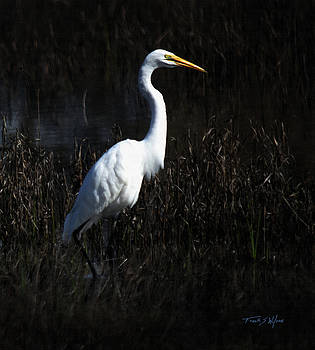 Wading Egret by Frank Wilson