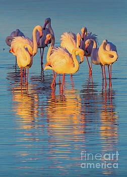 Wading Flamingos by Inge Johnsson