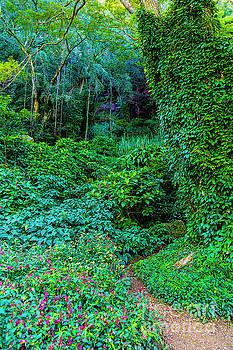 Jon Burch Photography - Waimea Arboretum and Botanical Garden