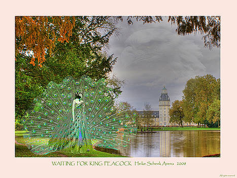 Waiting for king peacock by Heike Schenk-Arena