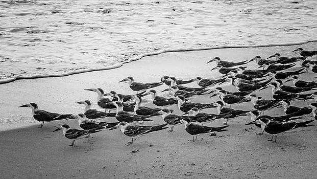 Debra and Dave Vanderlaan - Waiting for the Wave in Black and White