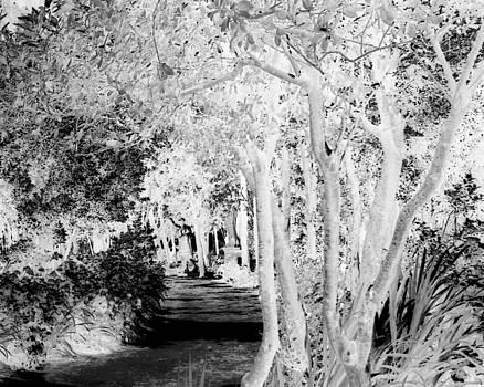 Walk in the Dark by Dana Patterson