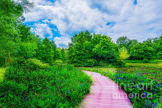 Walk into Beauty Shaw's Nature Reserve Wet Lands by Peggy  Franz