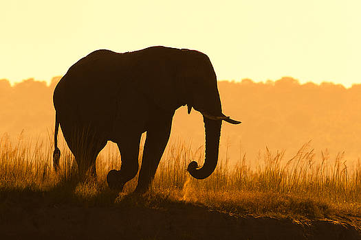 Walking at Sunrise in Chobe by Mario Moreno