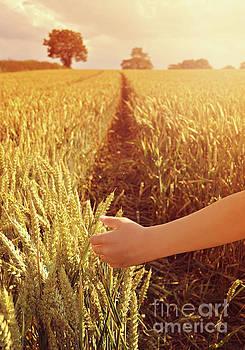 Walking through wheat field by Lyn Randle
