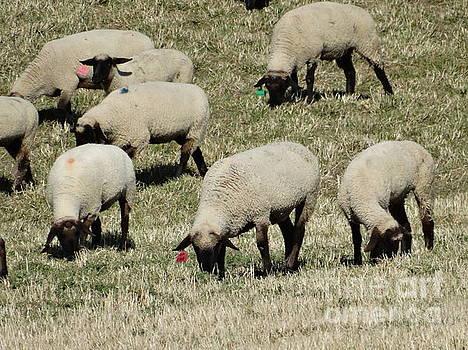 Wandering Wool by J L Zarek