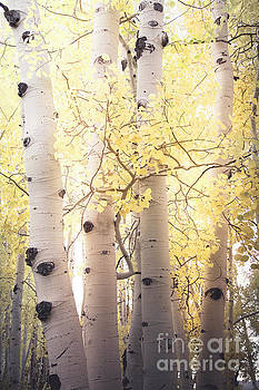 Warm Gold by The Forests Edge Photography - Diane Sandoval