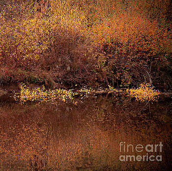 Warm Reflection by The Forests Edge Photography - Diane Sandoval