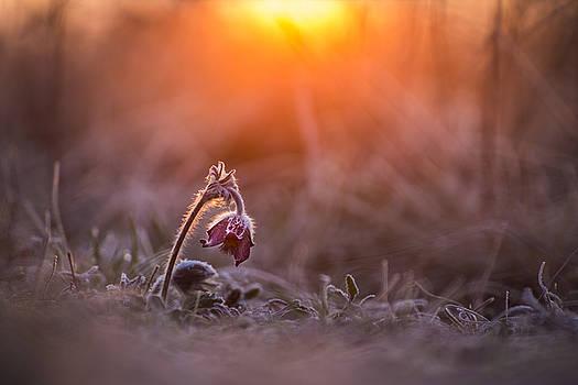 Warming up by Davorin Mance