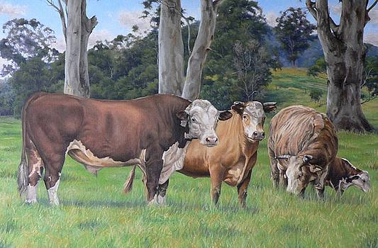 Warrawillah Cattle by Louise Green