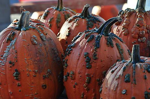 Warty Pumpkins by Diana Nigon