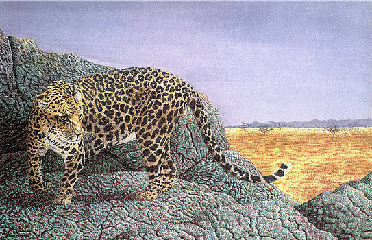 Wary Eyes - Leopard by Craig Carlson