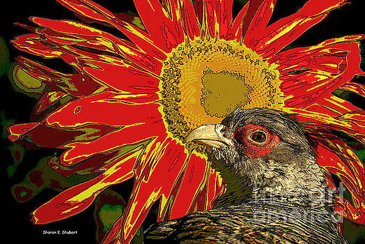 Wary Pheasant Art by Sharon K Shubert