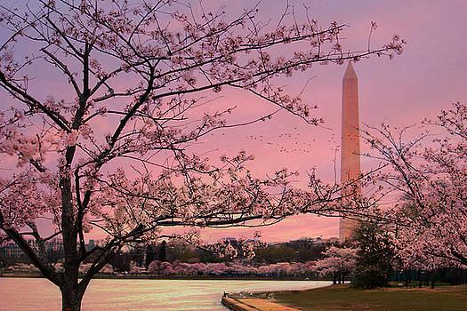 Washington Monument Cherry Blossom Festival by Shelley Neff