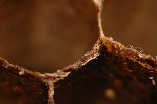 Wasp Nest by Dave Fischer
