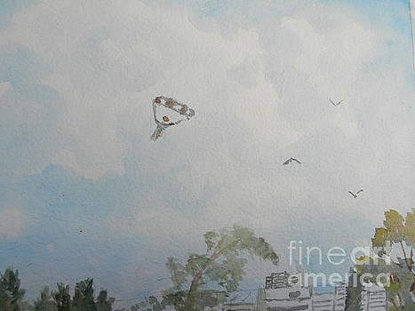 Watching Them as they come into Land by Pamela Meredith