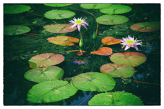 Water and Lotus Flowers by Albert Stewart