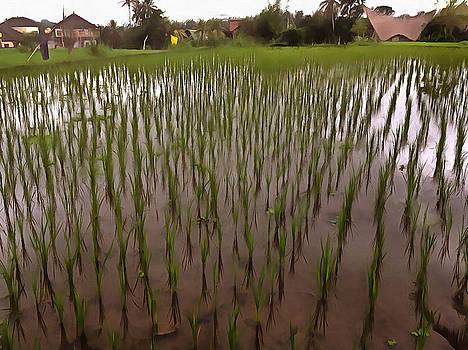 Water and paddy field by Ashish Agarwal