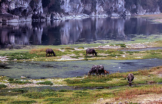 Water Buffalo on the Li River China by Lynn Bolt