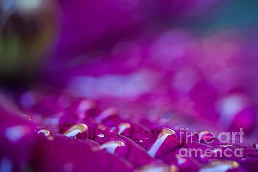 Water Color by Sue OConnor